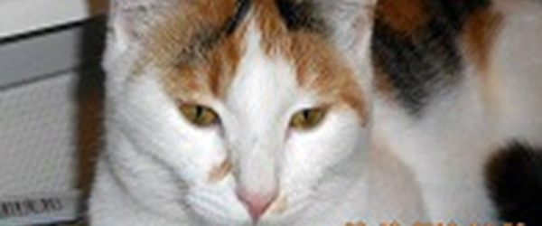 Har du set min kat?