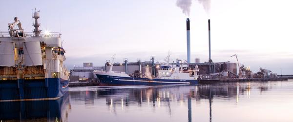 Godt år for en af verdens største fiskemelsfabrikker