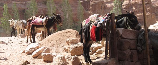 På vej mod Betlehem…