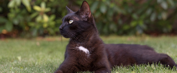 Tusindvis af efterladte killinger i sommerhusområder