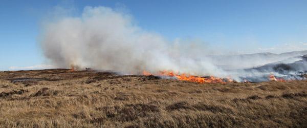 Afbrændingsforbud ophæves først, når græsset er grønt