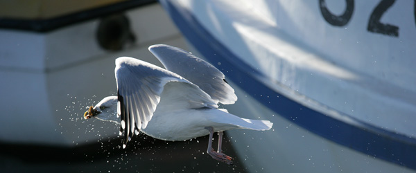Forretningsmuligheder i etape 3 udvidelsen er budskabet på Nor-Fishing