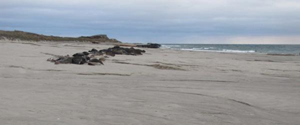 Læserbrev: Sandfodring for millioner er skyllet i havet