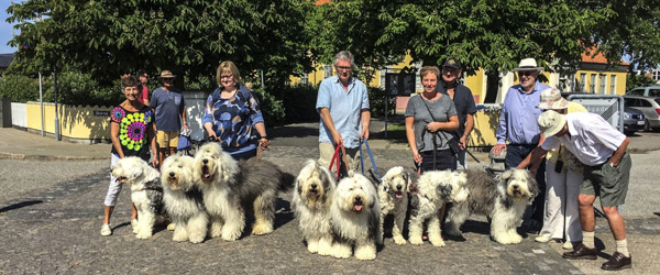 Old English Sheepdog Klubben kommer til Skagen