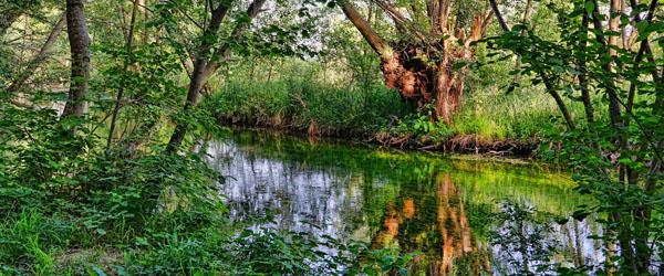 Oprettelse af vandråd for Kattegat og Skagerak