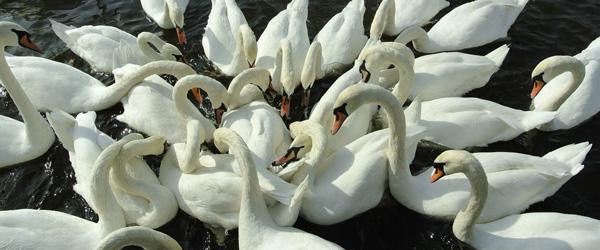 Undgå fuglefodring om vinteren