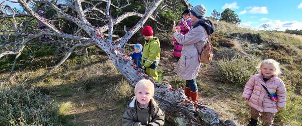 """Tag ungerne med ud til """"Mariehøne Træet"""""""
