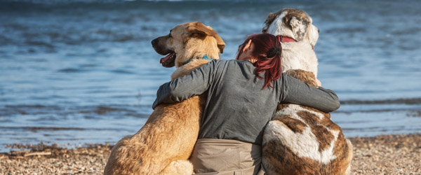 1. april skal strandhunden i snor