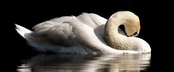 Fugleinfluenzaen har med stor sandsynlighed ramt Nordjylland