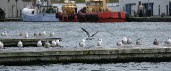 Skagen Havn klar med redegørelse for bæredygtighed for 2020